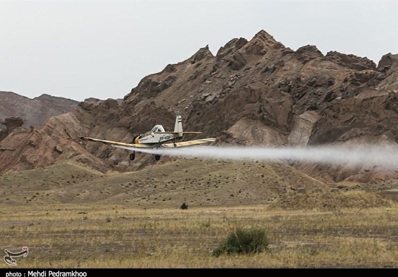 مبارزه با آفت ملخ در سطح ۳۰۰ هزار هکتار اراضی استان بوشهر