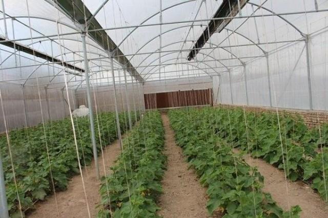 گلخانههای کوچک مقیاس در دشتی مجوزدار شدند