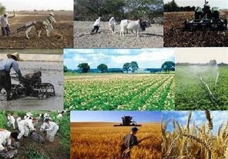485 میلیارد ریال تسهیلات صندوق توسعه ملی بخش کشاورزی استان بوشهر پرداخت شد