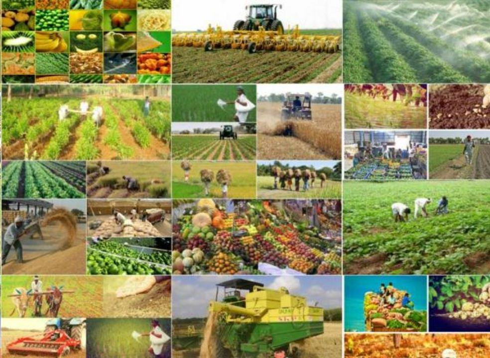 آموزش بیش از 500 نفر بهره بردار بخش کشاورزی استان بوشهر در سال جاری