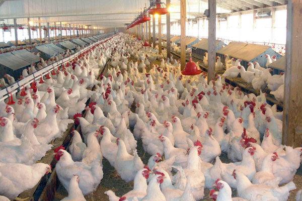 برگزاری کارگاه آموزشی بیماری آنفلوآنزای فوق حاد پرندگان  در شهرستان گناوه