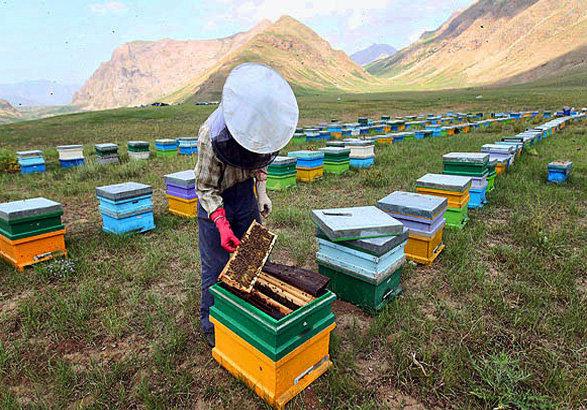 کارگاه آموزشی تخصصی زنبورداری در استان بوشهر برگزار می شود