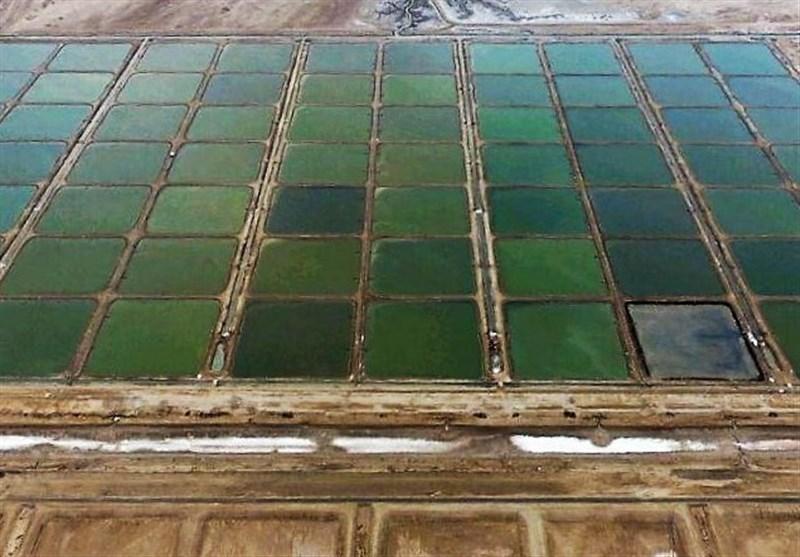 ۹۰۰ هکتار اراضی ساحلی به ظرفیت پرورش میگو استان بوشهر افزوده شد