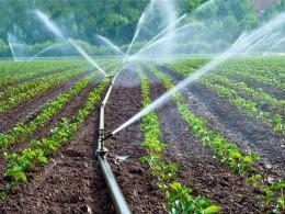530 هكتار از اراضی شهرستان دشتی در سال جاری به آبیاری نوین تجهیز شدند