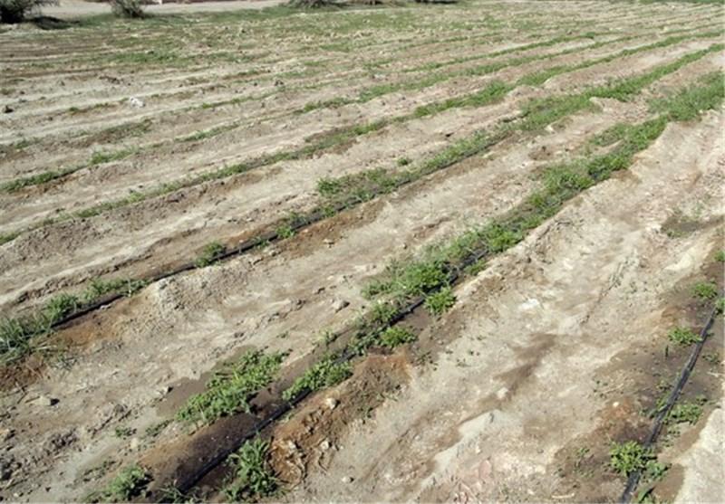 بیش از 9 هزار هکتار از اراضی شهرستان دشتی به آبیاری تحت فشار مجهز شده است