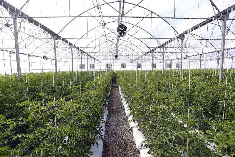 توسعه چهل هکتار گلخانه در شهرستان دشتی در سال 98