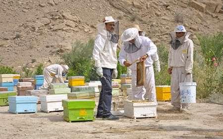 کنگان شهری مستعد در زمینه زنبورداری در استان بوشهر